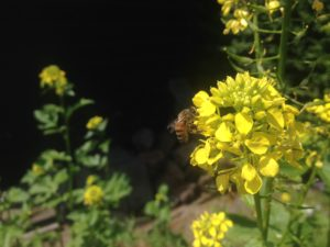 23 de bloemetjes en de bijtjes (7)
